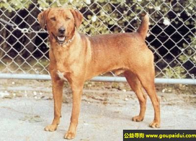 ,澳大利亚短毛宾莎犬 - 活泼、自信、警觉、机敏,它是一只非常可爱的宠物狗狗,希望它早日回家,不要变成流浪狗。