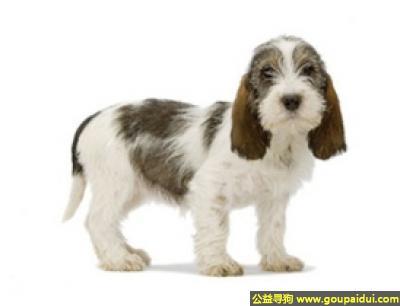 寻狗启示,蓝色加斯科涅格里芬犬 - 嗅觉灵敏,声音动听,非常的敏锐,它是一只非常可爱的宠物狗狗,希望它早日回家,不要变成流浪狗。