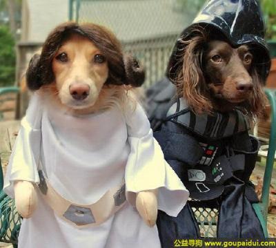 可爱狗狗 - 分享可爱狗狗有趣搞笑的图片