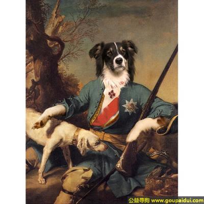 寻狗启示,英勇杀敌的皇家狗将领,它是一只非常可爱的宠物狗狗,希望它早日回家,不要变成流浪狗。