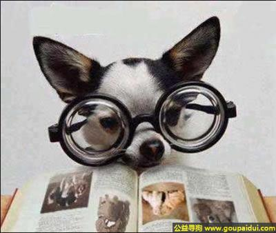 寻狗启示,为了考上好的大学的努力学习的狗,它是一只非常可爱的宠物狗狗,希望它早日回家,不要变成流浪狗。