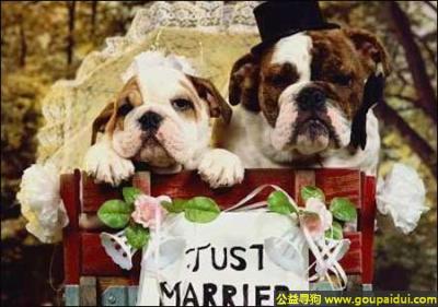 寻狗启示,狗狗要结婚了,一对真正的狗男女,它是一只非常可爱的宠物狗狗,希望它早日回家,不要变成流浪狗。