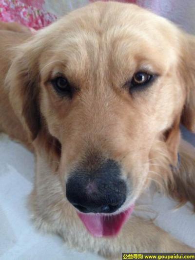 盐城捡到狗,苏盐城市建湖县捡到一只狗,它是一只非常可爱的宠物狗狗,希望它早日回家,不要变成流浪狗。
