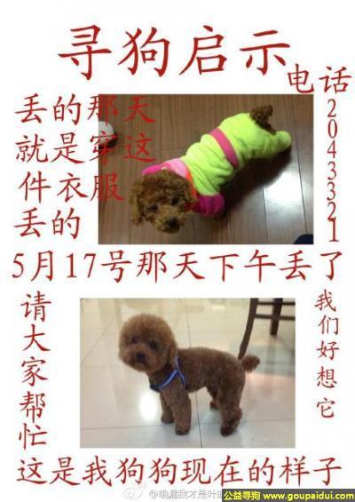 池州寻狗网,徽省池州市贵池区秋浦西路丢失一只名叫西红柿的狗狗,它是一只非常可爱的宠物狗狗,希望它早日回家,不要变成流浪狗。