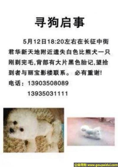 忻州找狗,西省忻州市长征中街君华新天地附近遗失白色比熊犬一只,它是一只非常可爱的宠物狗狗,希望它早日回家,不要变成流浪狗。