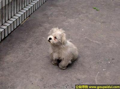 ,怎么写寻狗启示?,它是一只非常可爱的宠物狗狗,希望它早日回家,不要变成流浪狗。
