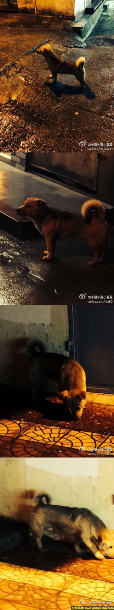 莆田寻狗主人,建省莆田市城厢区建安路发现一只流浪狗,它是一只非常可爱的宠物狗狗,希望它早日回家,不要变成流浪狗。
