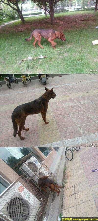 ,东省德州市发现一只流浪狗,它是一只非常可爱的宠物狗狗,希望它早日回家,不要变成流浪狗。