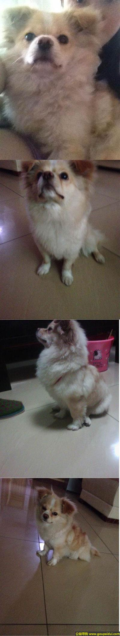 ,川巴中市平昌县寻狗名叫花花住在二中到三江大道附近的留意下,它是一只非常可爱的宠物狗狗,希望它早日回家,不要变成流浪狗。