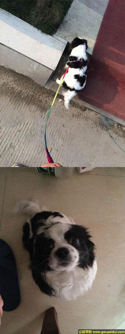 益阳寻狗,南省益阳市寻狗新城院北门走失黑白斑点狗狗,它是一只非常可爱的宠物狗狗,希望它早日回家,不要变成流浪狗。