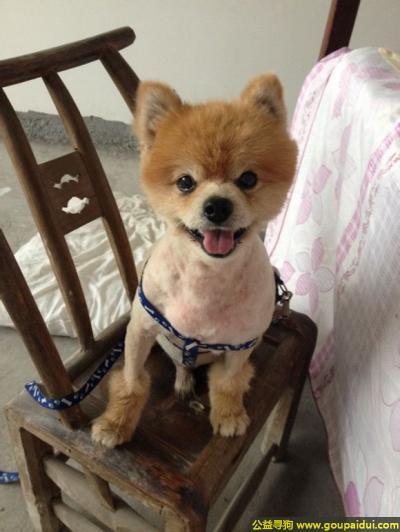 恩施寻狗网,北省恩施市武陵国际柑子槽寻狗,它是一只非常可爱的宠物狗狗,希望它早日回家,不要变成流浪狗。