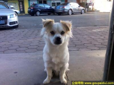 ,林省延边州寻狗浪漫满屋的肉肉,它是一只非常可爱的宠物狗狗,希望它早日回家,不要变成流浪狗。