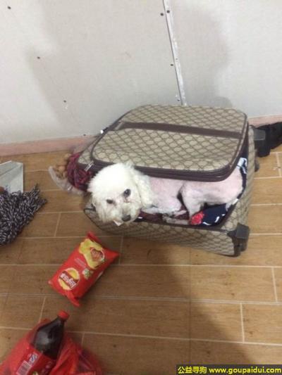 寻狗启示,江省台州市温岭市坞根镇寻狗工业区劳士顿新厂房丢失名叫欢欢,它是一只非常可爱的宠物狗狗,希望它早日回家,不要变成流浪狗。