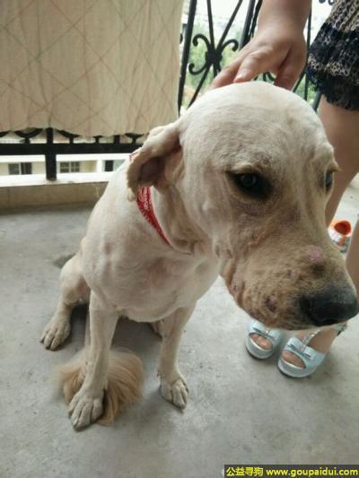 寻狗启示,徽省合肥市寻狗,它是一只非常可爱的宠物狗狗,希望它早日回家,不要变成流浪狗。