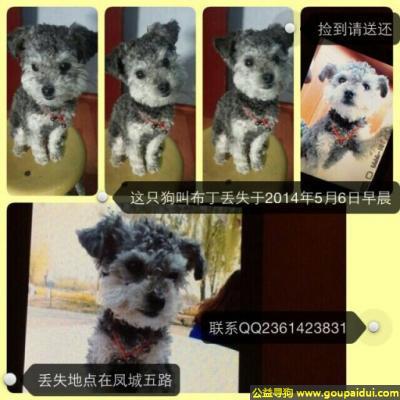 寻狗启示,西省西安市未央区凤城六路丢失名叫布丁,它是一只非常可爱的宠物狗狗,希望它早日回家,不要变成流浪狗。