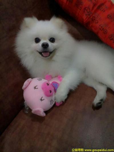 阳江找狗,东省阳江市寻狗二环路粤海酒店附近走失名叫宝宝白色狗狗,它是一只非常可爱的宠物狗狗,希望它早日回家,不要变成流浪狗。