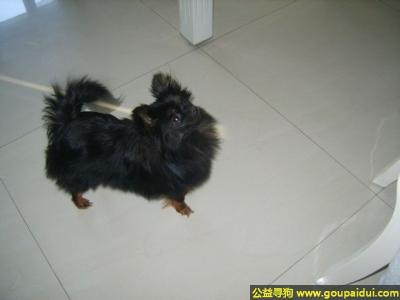 朝阳寻狗启示,宁省朝阳市寻狗名叫豆豆体毛黑色四肢黄色嘴巴像小狐狸,它是一只非常可爱的宠物狗狗,希望它早日回家,不要变成流浪狗。