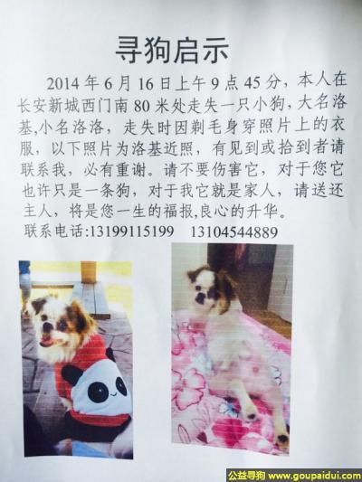 佳木斯找狗,龙江省佳木斯市寻狗长安新城西门丢失名叫洛基,它是一只非常可爱的宠物狗狗,希望它早日回家,不要变成流浪狗。
