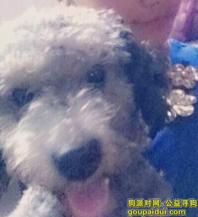 南平找狗,建省南平市建瓯市寻狗名叫lucky,它是一只非常可爱的宠物狗狗,希望它早日回家,不要变成流浪狗。