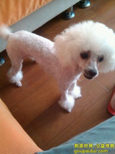 【汉中找狗】,西省汉中市城固县寻狗,它是一只非常可爱的宠物狗狗,希望它早日回家,不要变成流浪狗。
