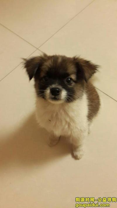 【郑州捡到狗】,南省郑州市鑫苑路鑫苑名家附近,狗狗很小,急急急急急,望转发。,它是一只非常可爱的宠物狗狗,希望它早日回家,不要变成流浪狗。