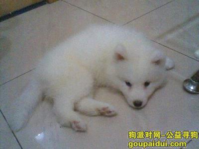 寻狗启示,幼犬吃什么狗粮好,它是一只非常可爱的宠物狗狗,希望它早日回家,不要变成流浪狗。