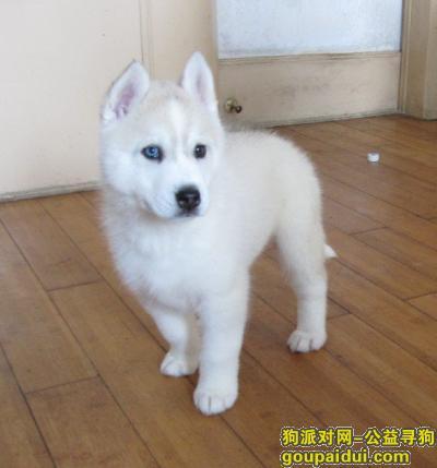 ,宠维滋狗粮好不好,它是一只非常可爱的宠物狗狗,希望它早日回家,不要变成流浪狗。