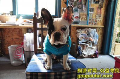 【上海找狗】,3月12日晚上九点在梧桐路工地走失一只斗牛犬叫戆戆,它是一只非常可爱的宠物狗狗,希望它早日回家,不要变成流浪狗。