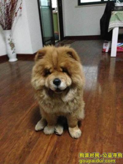鄂州找狗,松狮走失在鄂州吴都股市名字叫嘟嘟,它是一只非常可爱的宠物狗狗,希望它早日回家,不要变成流浪狗。