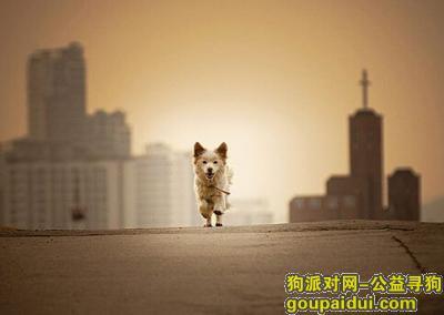 寻狗启示,天然狗粮排行,它是一只非常可爱的宠物狗狗,希望它早日回家,不要变成流浪狗。