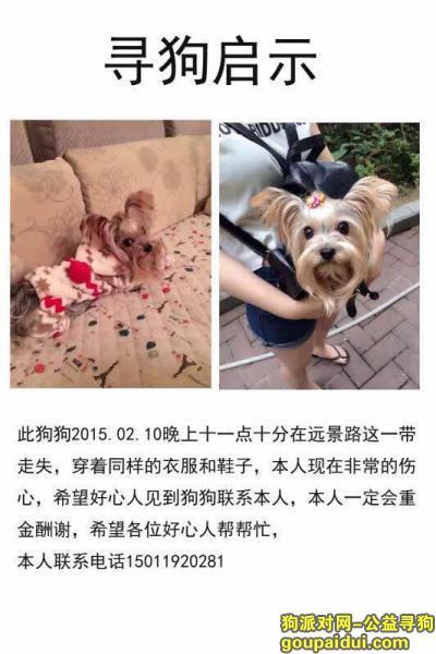 【广州找狗】,心急如焚,找狗狗,妈妈真的好想你,广州白云区远景路走失的约克夏。,它是一只非常可爱的宠物狗狗,希望它早日回家,不要变成流浪狗。