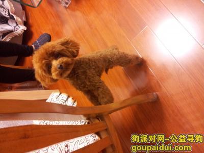 寻狗启示,上海闵行区浦江镇寻狗启示,它是一只非常可爱的宠物狗狗,希望它早日回家,不要变成流浪狗。