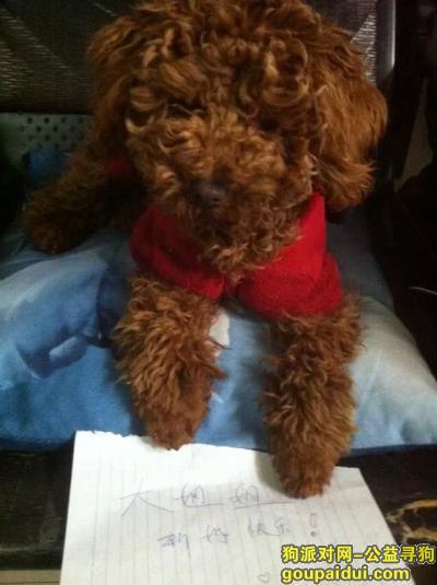 寻狗启示,宿州市萧县寻爱狗#,它是一只非常可爱的宠物狗狗,希望它早日回家,不要变成流浪狗。