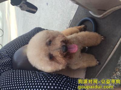 寻狗启示,2014年10月26日下午2点南昌市外国语高中部丢失的泰迪公狗,它是一只非常可爱的宠物狗狗,希望它早日回家,不要变成流浪狗。