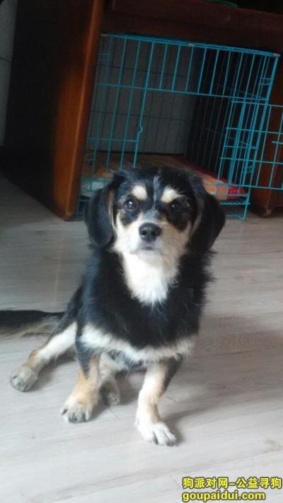 佳木斯寻狗网,快过年了 我们在等她回家,它是一只非常可爱的宠物狗狗,希望它早日回家,不要变成流浪狗。