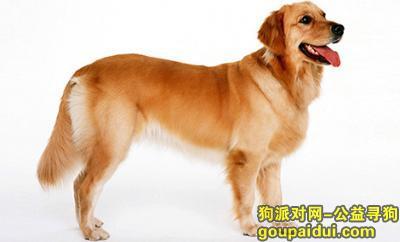 寻狗启示,奥丁狗粮价格,它是一只非常可爱的宠物狗狗,希望它早日回家,不要变成流浪狗。