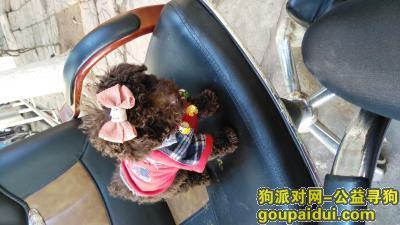 楚雄找狗,寻狗启示。小狗于2月28号晚8:30走丢,它是一只非常可爱的宠物狗狗,希望它早日回家,不要变成流浪狗。