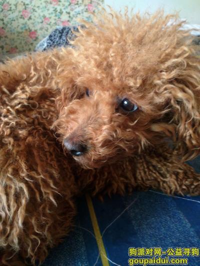 ,浙江长兴县在欧尚超市附近捡到的,它是一只非常可爱的宠物狗狗,希望它早日回家,不要变成流浪狗。