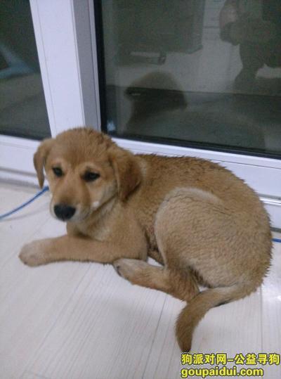 南通捡到狗,江苏南通捡到狗(苏通科技产业园),它是一只非常可爱的宠物狗狗,希望它早日回家,不要变成流浪狗。