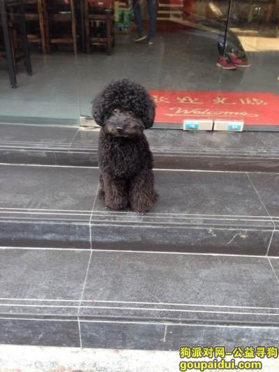 【广州找狗】,寻广州天河龙洞黑色贵宾乐乐,它是一只非常可爱的宠物狗狗,希望它早日回家,不要变成流浪狗。