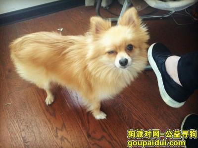 潜江找狗,湖北省潜江市园林青广场丢失金黄色、脖子上红色铃铛的小狗,它是一只非常可爱的宠物狗狗,希望它早日回家,不要变成流浪狗。