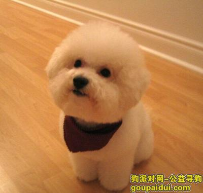 寻狗启示,自制幼犬狗粮配方,它是一只非常可爱的宠物狗狗,希望它早日回家,不要变成流浪狗。