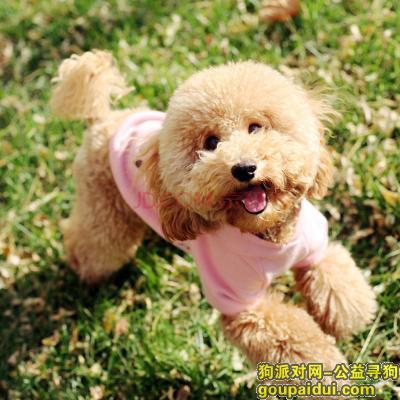 寻狗启示,自制幼犬狗粮,它是一只非常可爱的宠物狗狗,希望它早日回家,不要变成流浪狗。