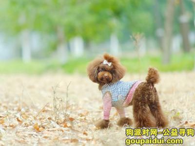 寻狗启示,宠物狗狗丢了怎么办,它是一只非常可爱的宠物狗狗,希望它早日回家,不要变成流浪狗。