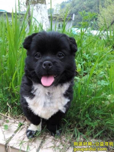 寻狗启示,怎样写寻狗启示,它是一只非常可爱的宠物狗狗,希望它早日回家,不要变成流浪狗。
