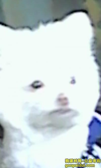 雅安寻狗网,寻狗启示(狗名丁丁),它是一只非常可爱的宠物狗狗,希望它早日回家,不要变成流浪狗。