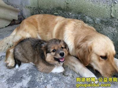 崇左寻狗启示,【寻狗启事】凭祥寻狗,家在检验检疫局对面,它是一只非常可爱的宠物狗狗,希望它早日回家,不要变成流浪狗。
