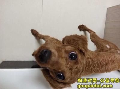 ,寻狗(miki)启示,它是一只非常可爱的宠物狗狗,希望它早日回家,不要变成流浪狗。