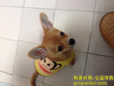 怀化寻狗启示,望好心人帮助爱犬早日回家!,它是一只非常可爱的宠物狗狗,希望它早日回家,不要变成流浪狗。