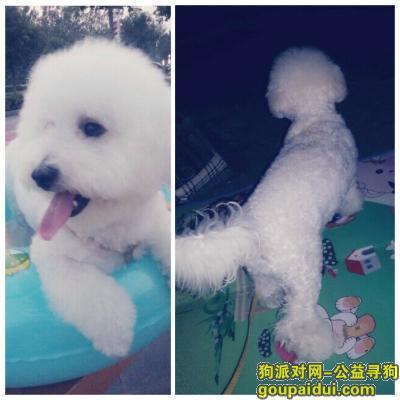 鹤壁寻狗启示,寻狗启示(lucky),它是一只非常可爱的宠物狗狗,希望它早日回家,不要变成流浪狗。
